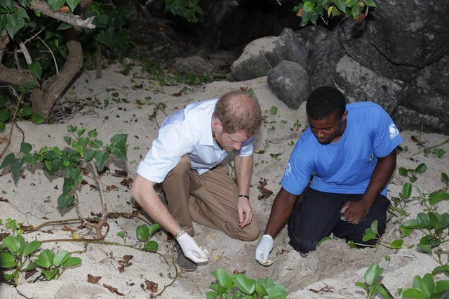 Prince Harry at Turtle Nesting Site on Lovers Beach in Nevis